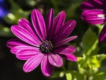 Blommor och bär i trädgård fotografering för bildbyråer