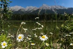 Blommor och berg framme och bak en sjö royaltyfri foto