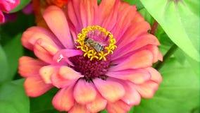 Blommor och bi stock video