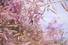 Blommor och bi royaltyfri foto