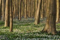 Blommor och Blått-klockor i skog Arkivfoton