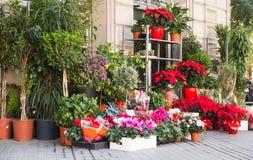 Blommor och buskar i gård av blomsterhandeln Royaltyfria Bilder