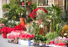 Blommor och buskar i gård av blomsterhandeln Royaltyfri Fotografi