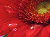Blommor och droppe Arkivbild