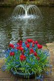 Blommor och en springbrunn Arkivfoton
