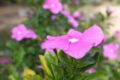 Blommor och färger Royaltyfri Foto