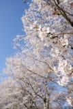 Blommor och fodrade träd arkivbilder