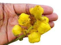 Blommor och garnering Royaltyfri Bild