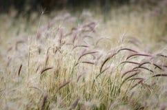 Blommor och gräs i El Calafate, Argentina royaltyfria bilder