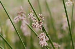 Blommor och gräs i El Calafate, Argentina Royaltyfri Foto