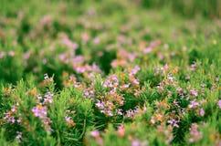 Blommor och gräsplanbuskar i parkera i vår Naturbackgroun Royaltyfri Foto