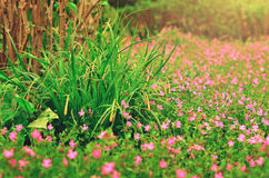 Blommor och gräsplanbuskar i parkera i vår Naturbackgroun Royaltyfria Bilder