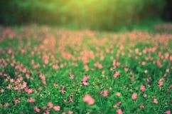 Blommor och gräsplanbuskar i parkera i vår Naturbackgroun Arkivfoto