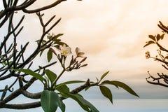 Blommor och himmel med härligt orange ljus royaltyfria foton