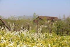 Blommor och hus Arkivfoton