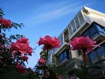 Blommor och hus i rhemorgon Arkivfoto