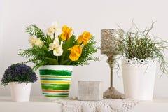Blommor och inomhus växter på vit väggbakgrund arkivbilder