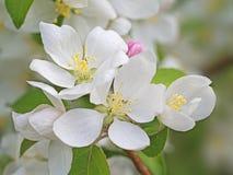 Blommor och knoppar royaltyfri fotografi