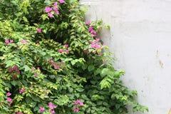 Blommor och lämnar Royaltyfri Foto