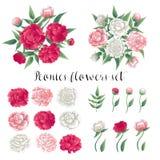Blommor och lämnar Rosa och vita pioner blom- dekorativa element många ställde in vektor illustrationer
