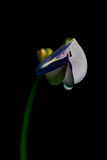 Blommor och myror Arkivfoton