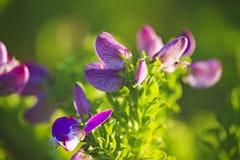 Blommor och natur royaltyfria foton