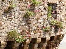 Blommor och ogräs Royaltyfria Bilder