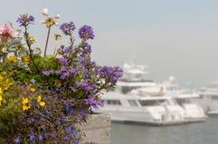 Blommor och privata lyxiga yachter Arkivbild