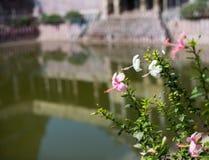 Blommor och reflexionen i tempel bevattnar Arkivbild