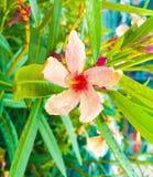 Blommor och regnet royaltyfria foton
