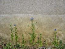 Blommor och riden ut vägg royaltyfri fotografi