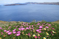 Blommor och ser Royaltyfri Foto