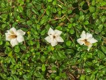 Blommor och sidor är framstående i mitt av bilden Arkivfoto