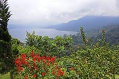 Blommor och sjö Batur i Bali Arkivbild