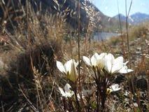 Blommor och sjön arkivfoto