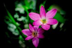 Blommor och skuggor Royaltyfri Bild