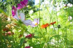 Blommor och solljus i trädgård. Arkivbilder