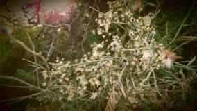 Blommor och solsken Royaltyfri Fotografi