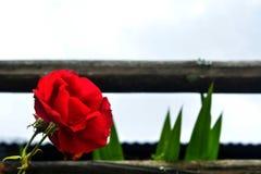 Blommor och staket Royaltyfria Foton