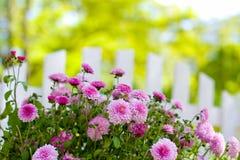 Blommor och staketnärbild Royaltyfria Bilder