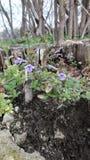 blommor och stubbe fotografering för bildbyråer