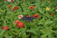 Blommor och svart fjäril med blommabakgrund Arkivfoton