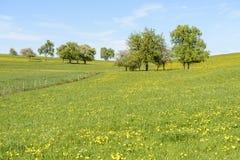 Blommor och träd i den gröna vårcontrysiden, Baden Wuttenbe Arkivbilder