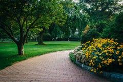 Blommor och träd längs en bana på det Georgetown universitetet, i Washi Arkivfoton