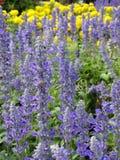 Blommor och trädgård Royaltyfria Foton
