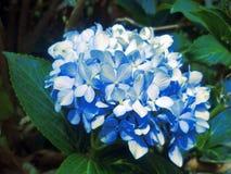 Blommor och trädgård royaltyfri bild