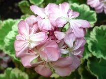 Blommor och trädgård royaltyfri fotografi