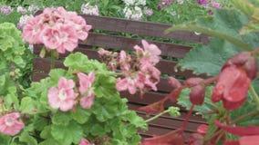 Blommor och trädgårdbänk stock video