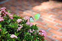 Blommor och två fjärilar Fotografering för Bildbyråer