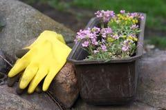 Blommor och utrustning i trädgård Arkivfoton